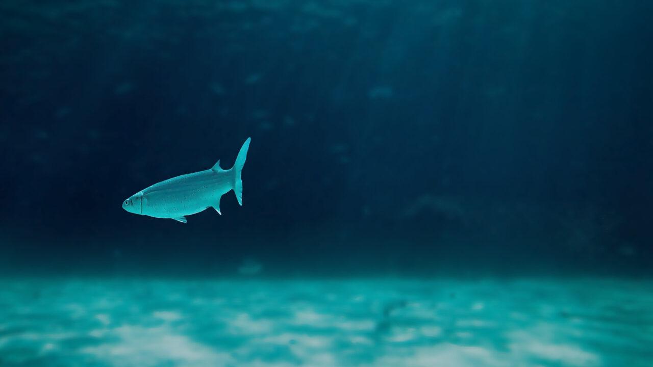 Underwater Sensor Network Scheme for AUV Based River Monitoring